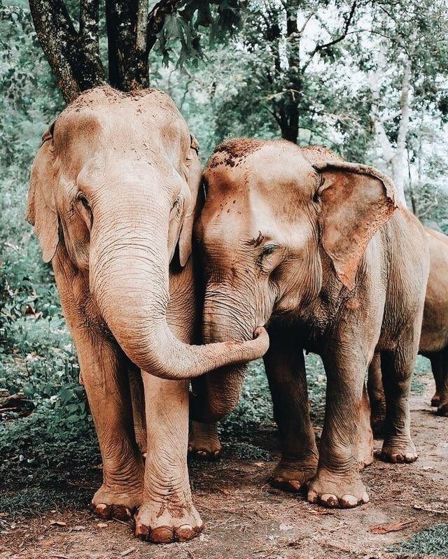 Cute Elephants  uploaded by la bohème on We Heart It