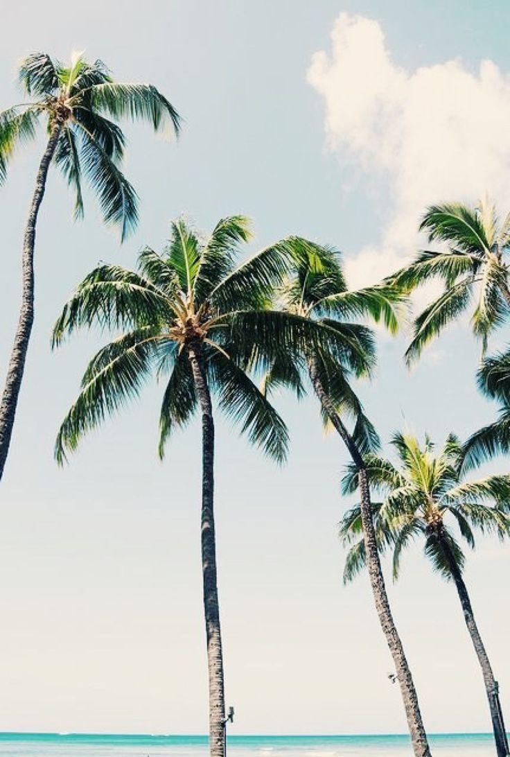 p a l m t r e e s endless summer pinterest aloha