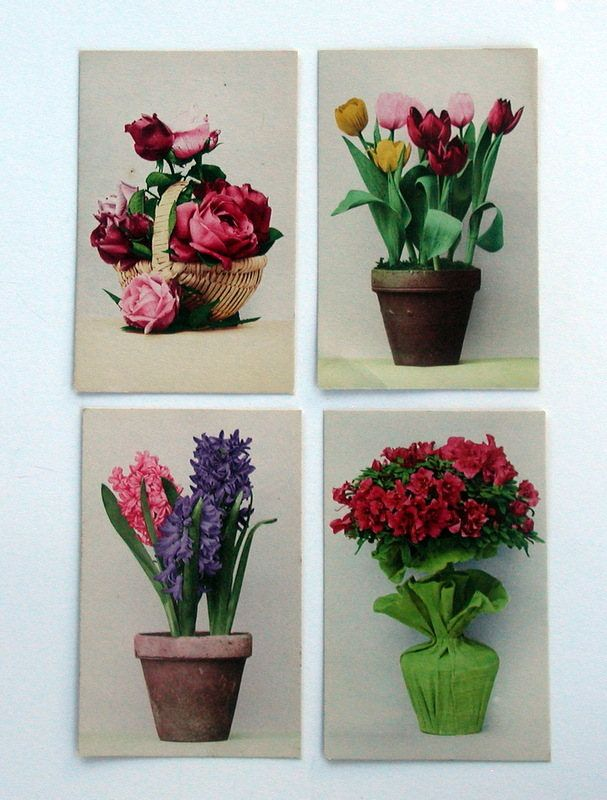 Vintage Early 1900's Real Photo Botanical Floral Postcards Tinted RPPC Printed In Germany Lot of 4 by LionheartGalleries on Etsy