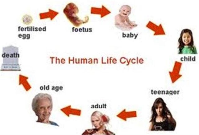 محتويات المقال1 مراحل نمو الانسان من الطفولة إلى الشيخوخة2 المرحلة الجنينية3 مرحلة المهد4 مرحلة الطفولة5 مرحلة ا Human Life Cycle Life Cycles Life Cycle Stages