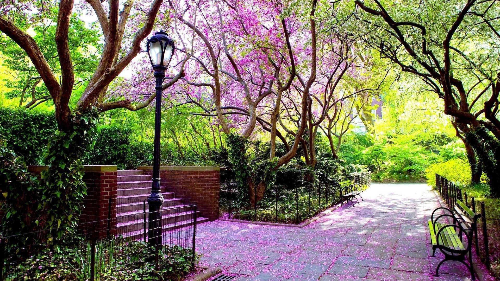 Cherry Blossoms Japan Hd Desktop Wallpaper High Definition 1920 1080 Japanese Desktop Wallpaper 57 Wallpa Spring Landscape Spring Landscaping Spring Nature