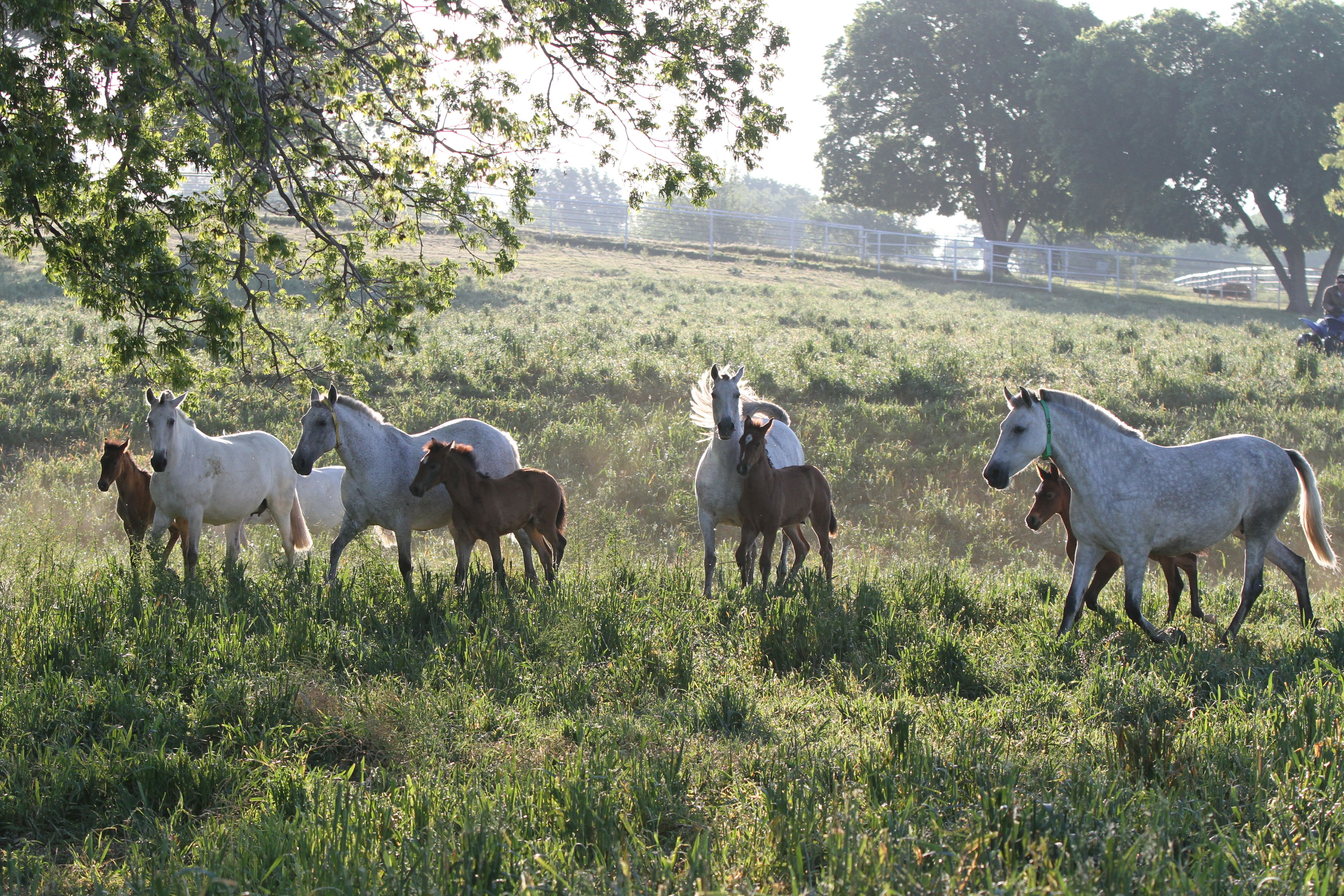 Misty-morning-for-Medieval-Times-horses-at-Chapel-Creek-Ranch.jpg (4708×3139)