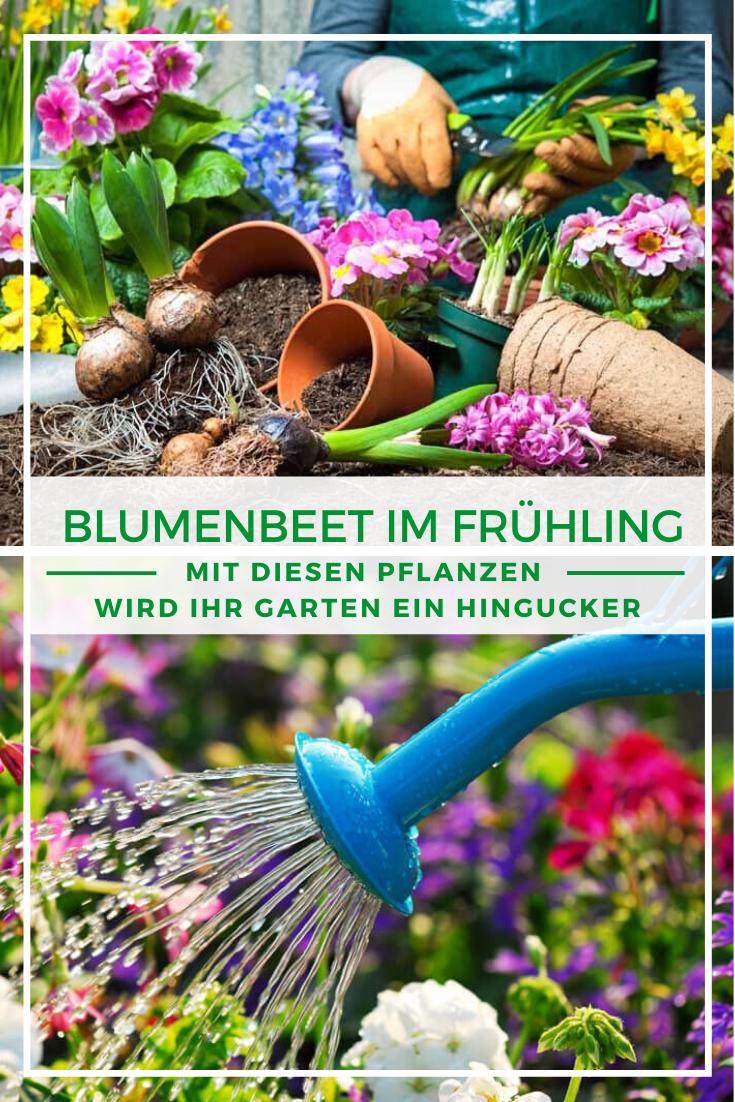 Blumenbeet bepflanzen: Blumenbeet im Frühling - Mit diesen Pflanzen wird Ihr Garten ein Hingucker
