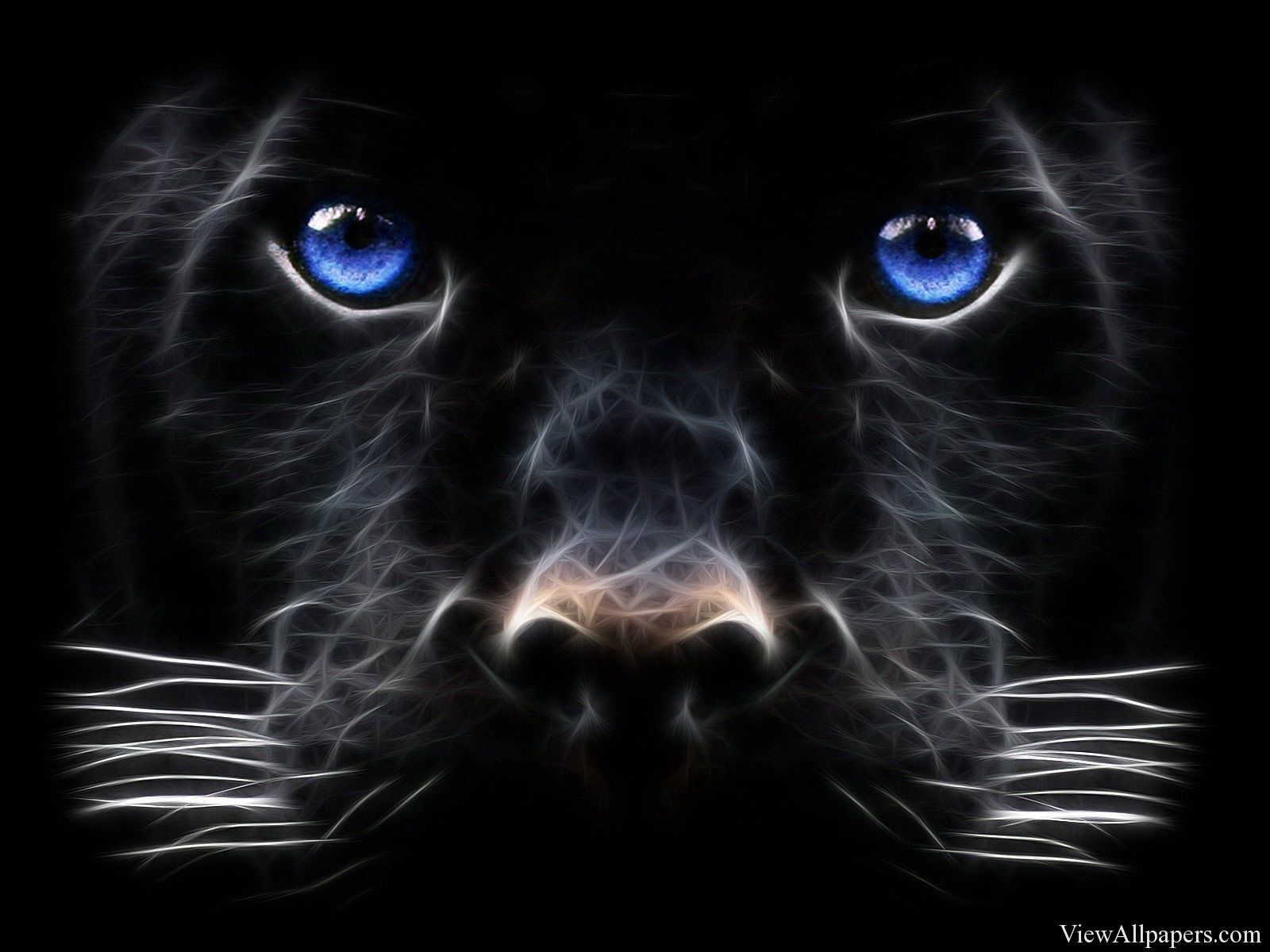 3d Black Tiger Blue Eyes 3d Amp Abstract Hd Wallpapers Black