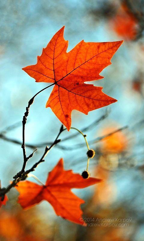 خلفيات للشاشة الجوال طبيعة خلفية جميلة لسطح المكتب سطح المكتب خلفيات 480x800 Beautiful Tree Autumn Leaves Art