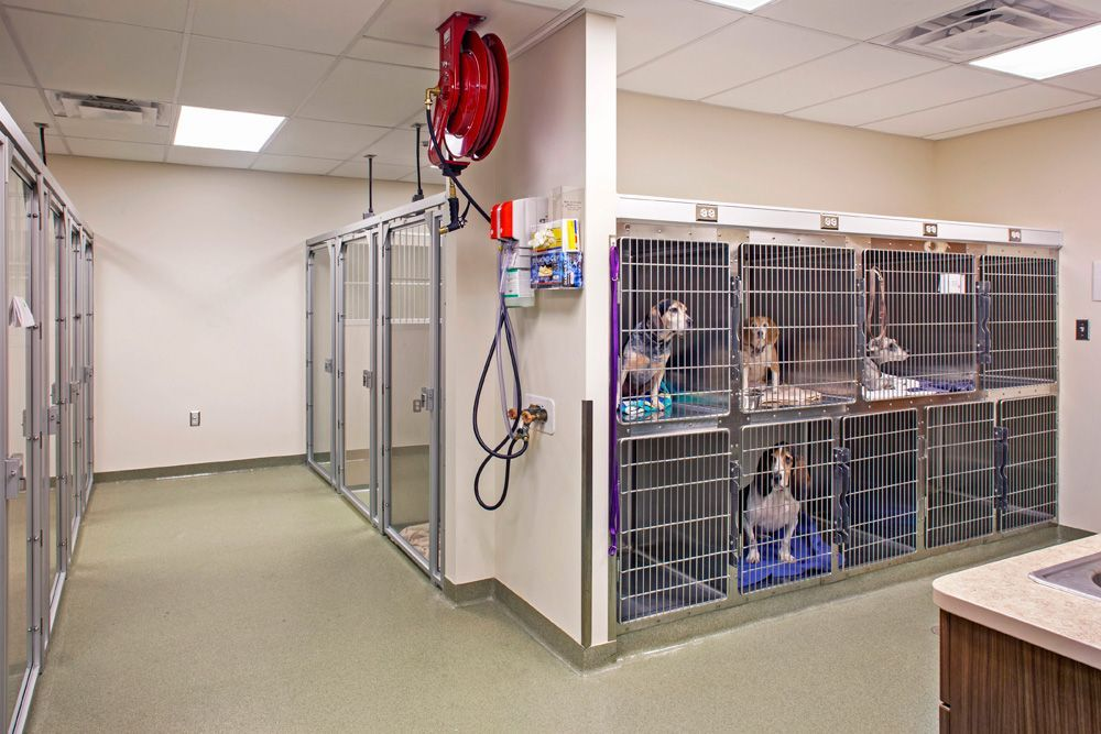 veterinary inpatient ward Google Search (With images