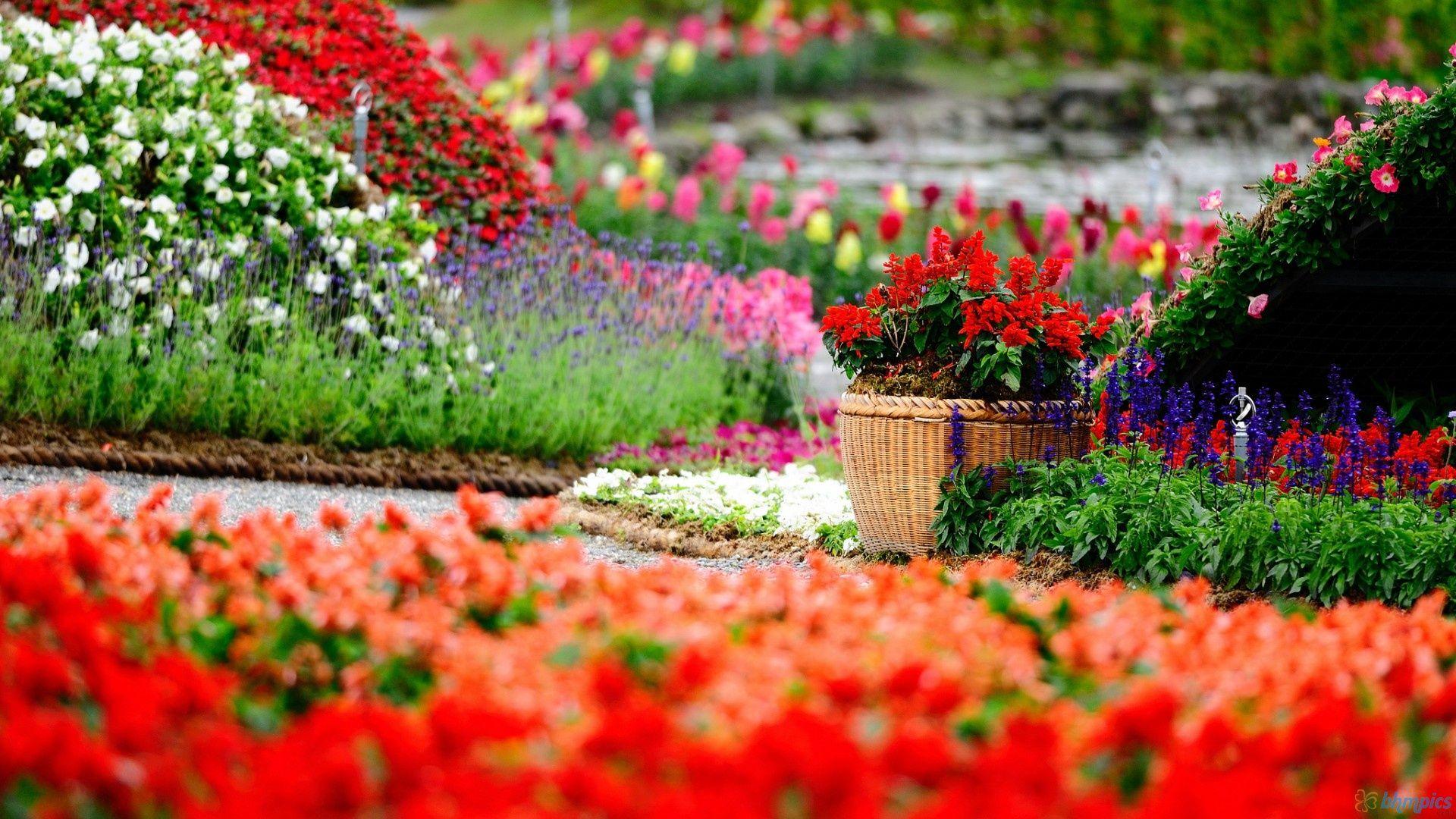 Amazing flower garden blooming buds pinterest amazing flowers amazing flower garden mightylinksfo