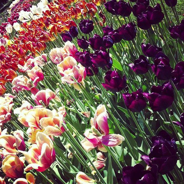 White Flower Farm In Morris Ct Ct Greenhouses Nurseries