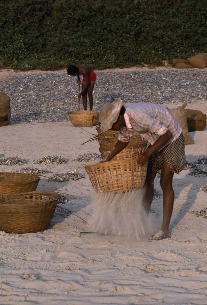 Polyester coated dishwasher safe ceramic mug. INDIA Goa Colva Beach Men sifting sand from sun dried fish in baskets. industry. Image supplied by EyeUbiquitous