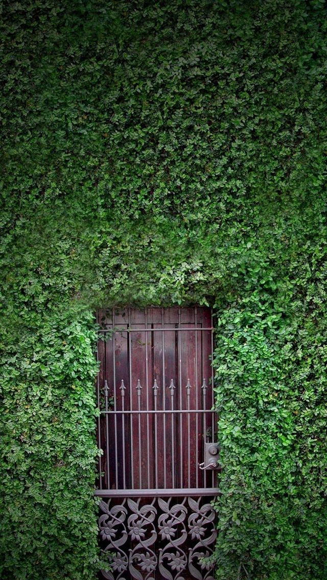 Green wall iPhone 5s Wallpaper Download | iPhone Wallpapers