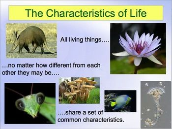 Always FREE!  Characteristics of Life Powerpoint for any Life Science Class.  Here is a freebie for you. This is a PowerPoint on the characteristics of life. It is 11 slides that are bright, colorful, and contain some pretty cool pictures. Use this in grades 4 and higher as an introduction to any life science unit. It is a great first day of school attention grabber.