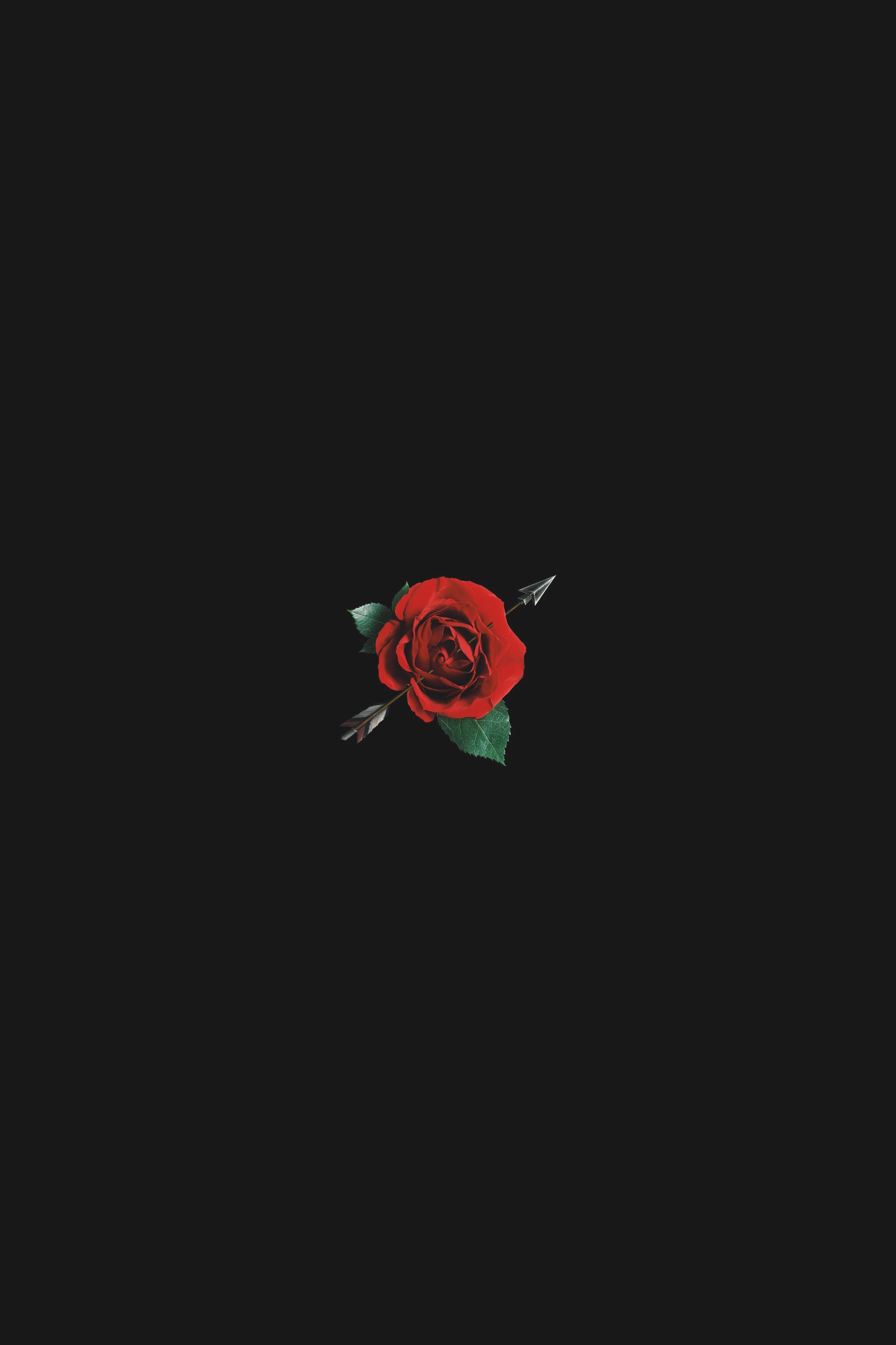 Red Rose Amoled Avermusic Instagram Avermusic Black Phone
