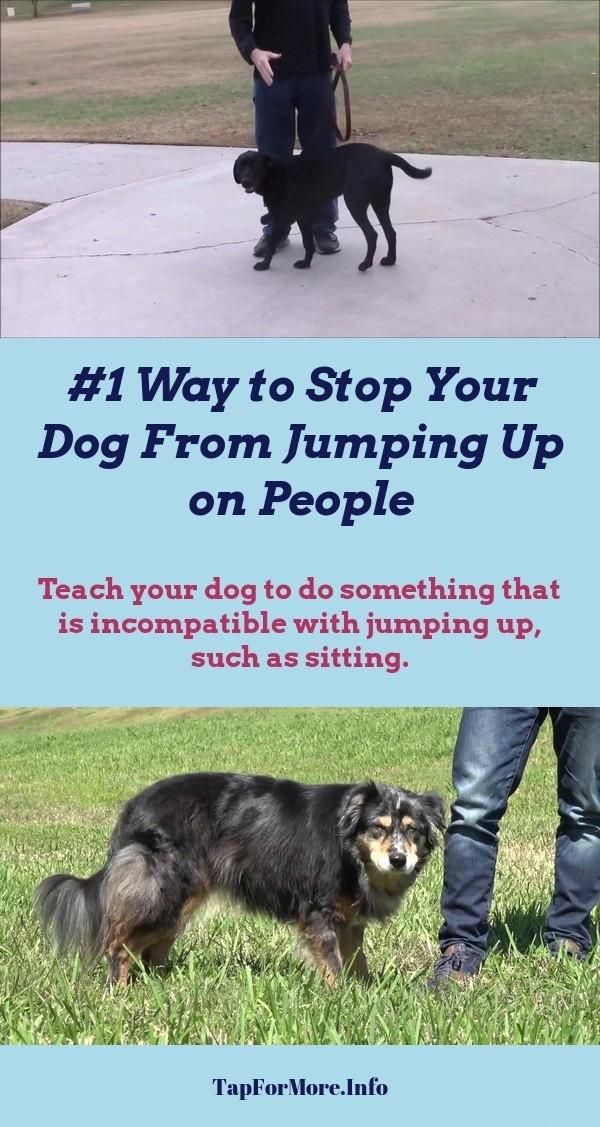 Stop Dog Jumping And How To Potty Train A Puppy Go Outside Check The Pic For Many Dog Training Dog Clicker Training Dog Training Tips Dog Training Obedience