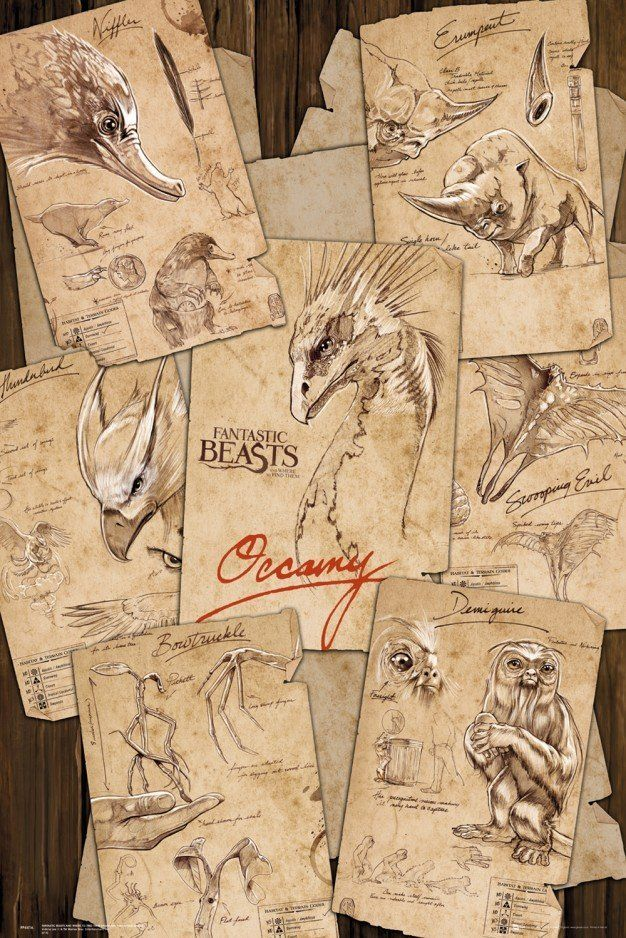 Fantastic Beasts Field Notes Maxi Poster