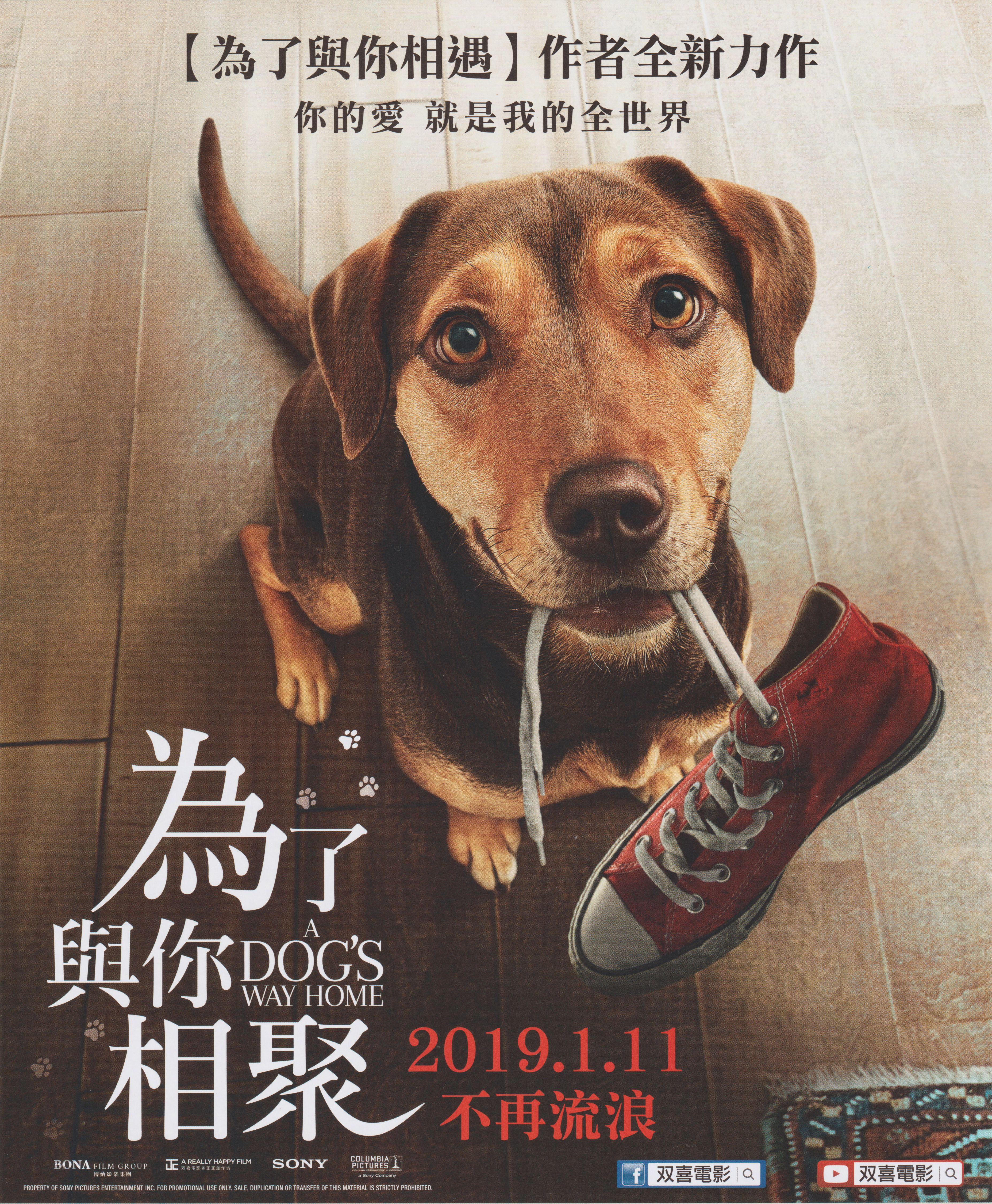A DOG'S WAY HOME (為了與你相聚) (Issue Date 2019.1.11) Dogs