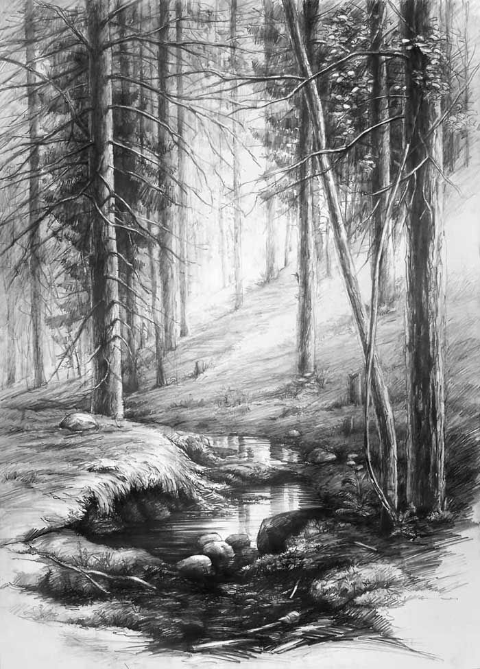 Forest Interior By Hipiz Deviantart Grayscale Scenic Trees Coloring