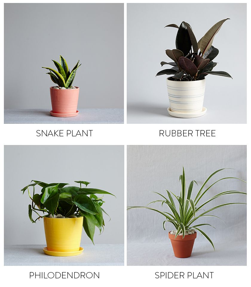 Plants For The Bedroom With The Sill.