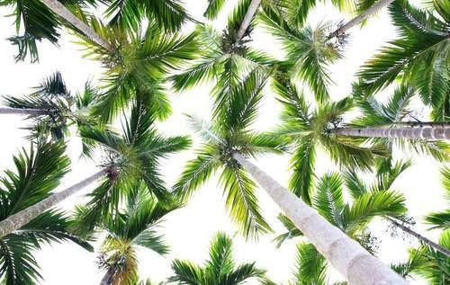 Tropical Island Wedding (instagram: the_lane)
