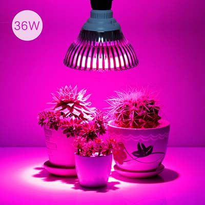 Top 10 Best Led Grow Lights Reviews Smart Buying Led 400 x 300