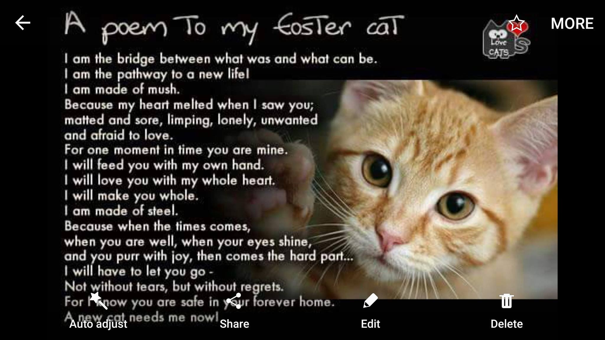 Pin By Tricia Narma On Foxyfarms Foster Cat Cat Poems The Fosters