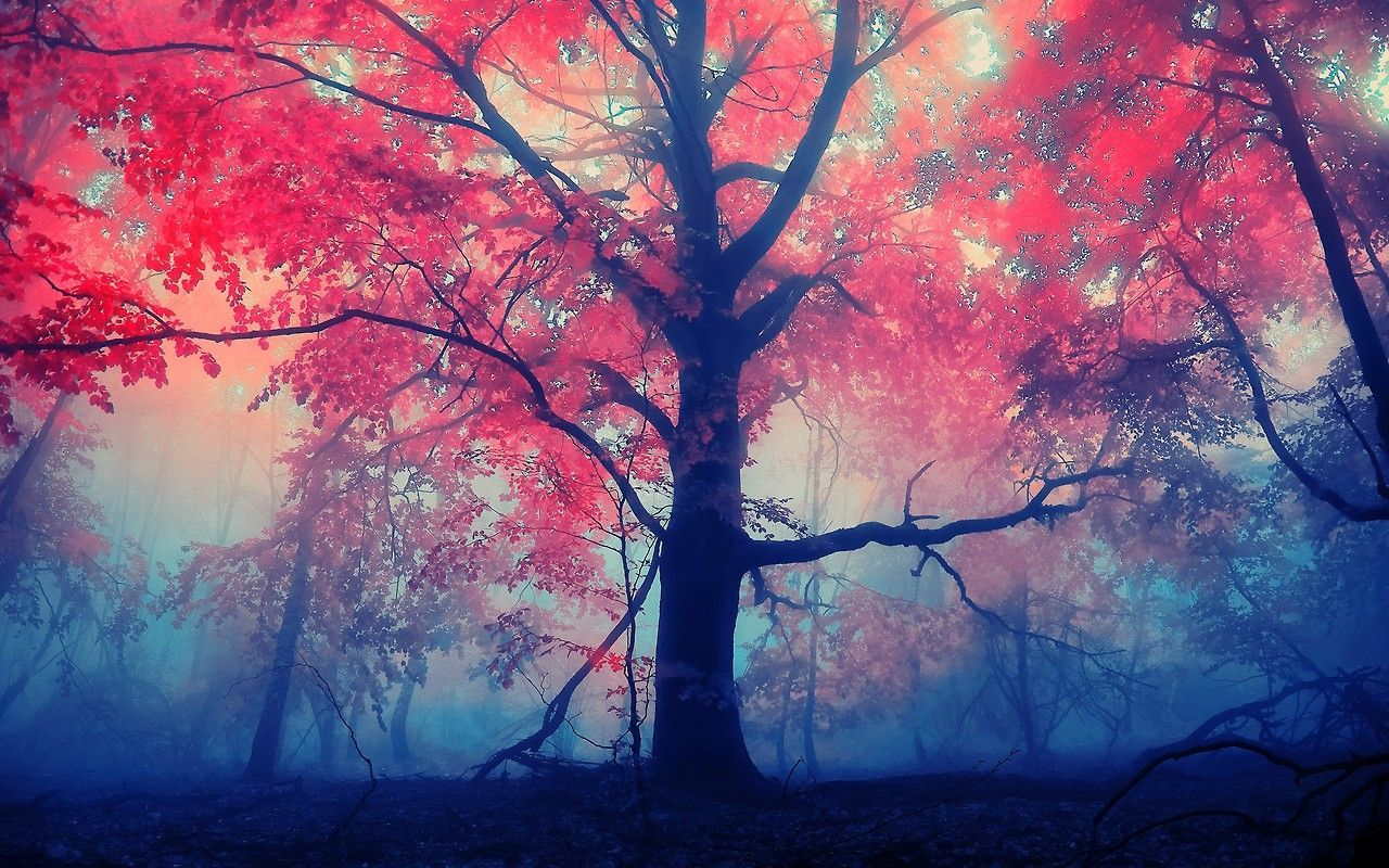 Pretty Wallpapers Tumblr Group 54 Nature Wallpaper Tree Wallpaper Pretty Backgrounds
