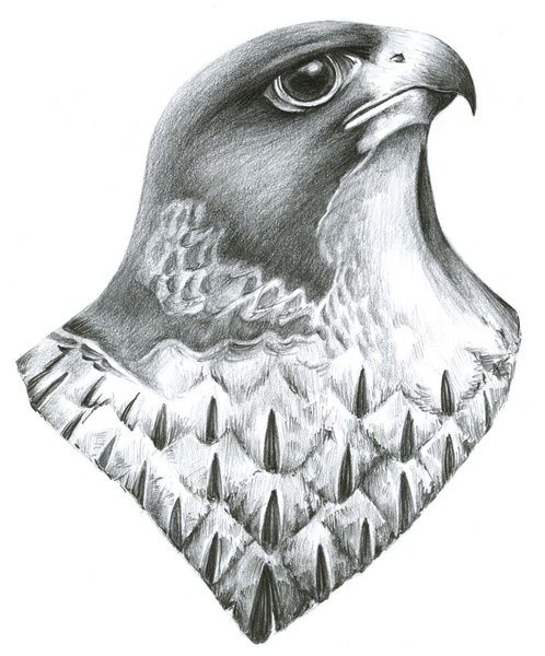 Peregrine falcon Art Limited Edition Artist print of beautiful bird