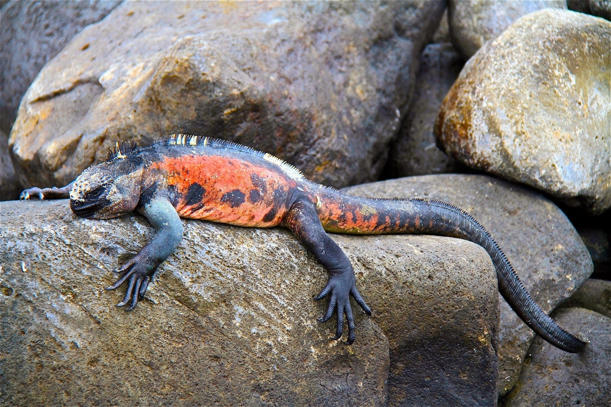 Reptiles And Amphibians Are Sometimes Thought Of As