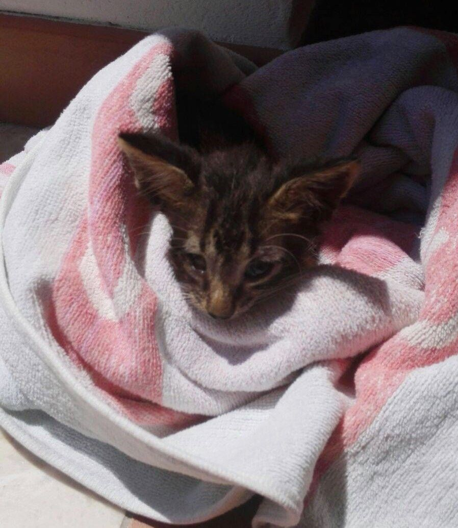 Coast Guard Brings Drowning Kitten Back To Life With Mouth To Mouth Cpr Gatito Costa Guardacostas