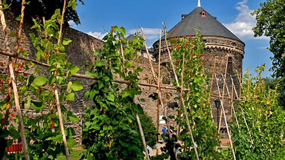 """Video """"Andernach - die essbare Stadt: Bohnen und Beere ..."""