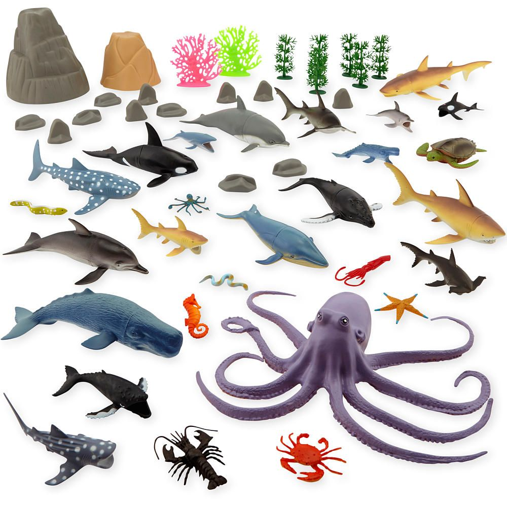 Image Result For Ocean Animals List Animal Photos To