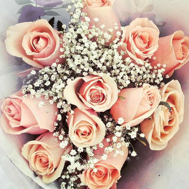 Gears up for V-day! - pink roses flowers valentine's day baby's breath bouquets - See more pretty bouquets @jacquelinecitrin on Instagram