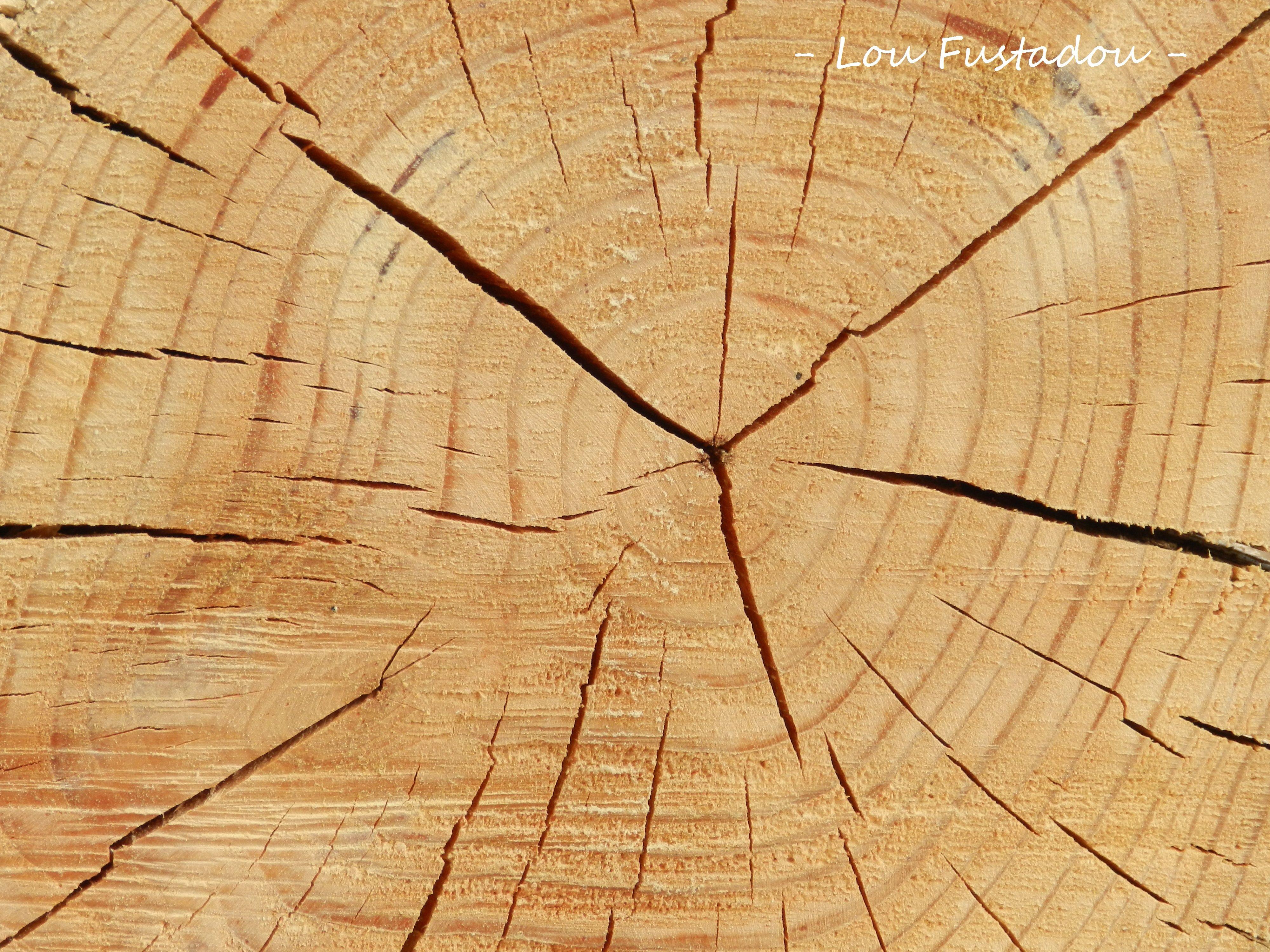 Vue de face d\'un rondin de bois brut (Douglas) | Mobilier de jardin ...