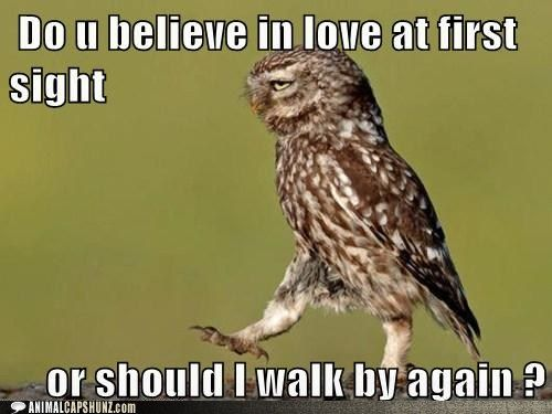Bad Pick-Up Line Owl