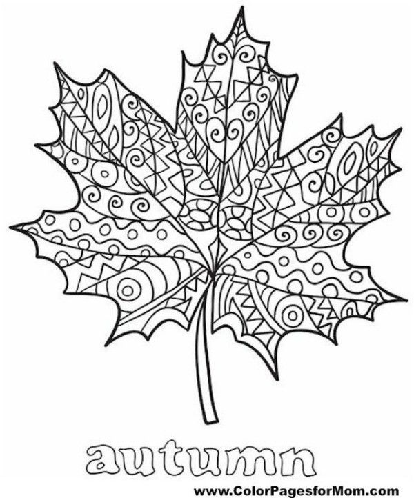 Intricate Autumn Leaf Fall Leaves Coloring Pages Fall Coloring Pages Thanksgiving Coloring Pages