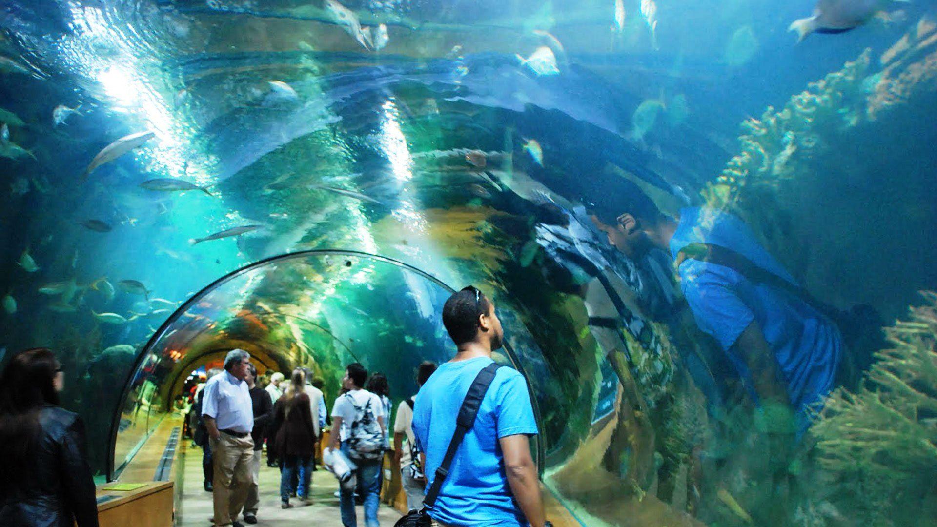 Valencia Aquarium Spain Tourism Pinterest Valencia