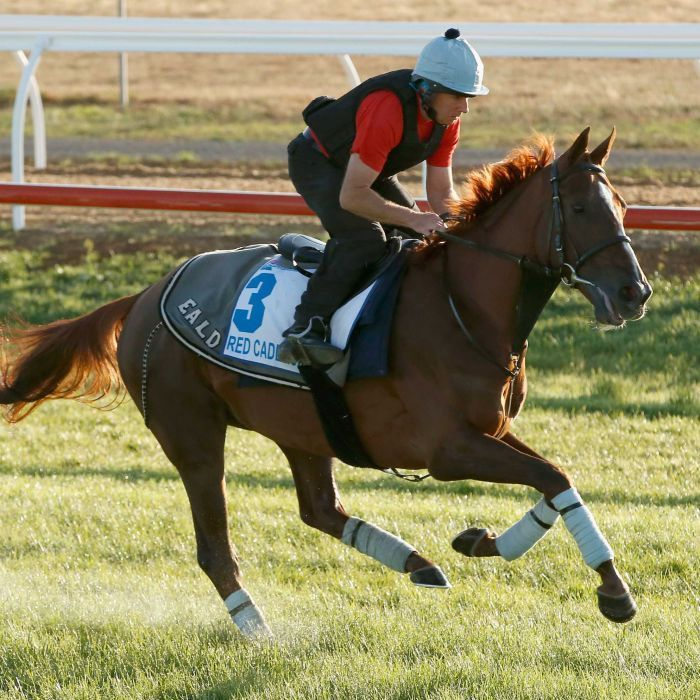 Fan favourite Red Cadeaux euthanased due to the complications with the injury the stayer sustained at the Melbourne Cup earlier this month.