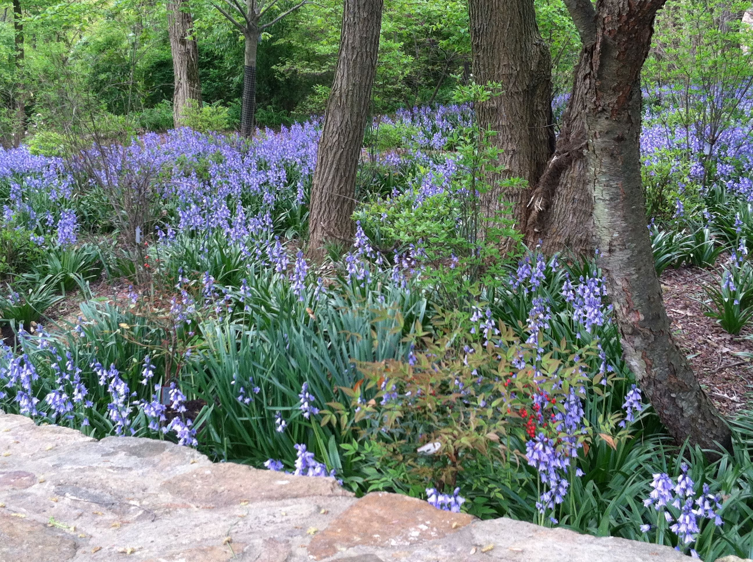 How to plant ground cover for shady areas - Great Suggestions For Shade Ground Covers Thegardendiaries Wordpress Com