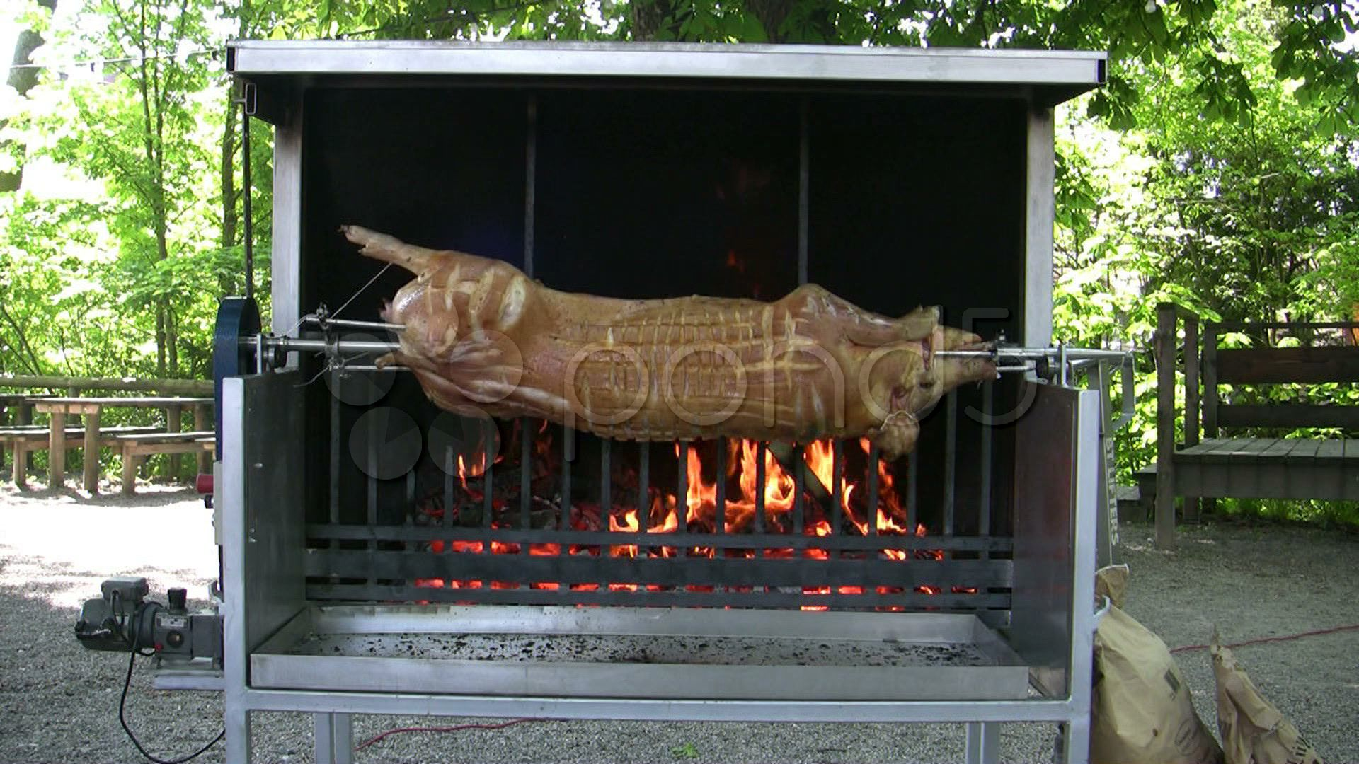 Germany beer garden open fire bbq grill roasting whole pig