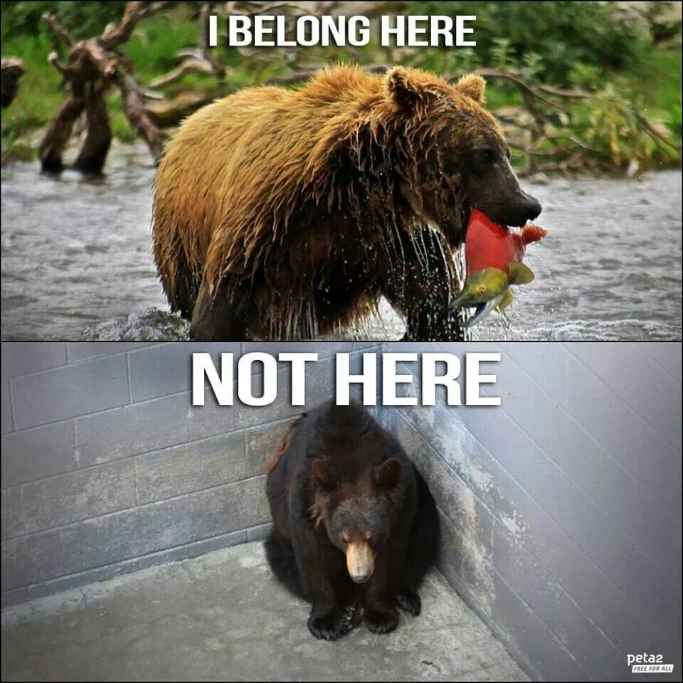 zoos should be allowed Should zoos be banned zoos should not be banned because 1 zoos have many educational benefits - you are able to see the animals that are from foreign countries.