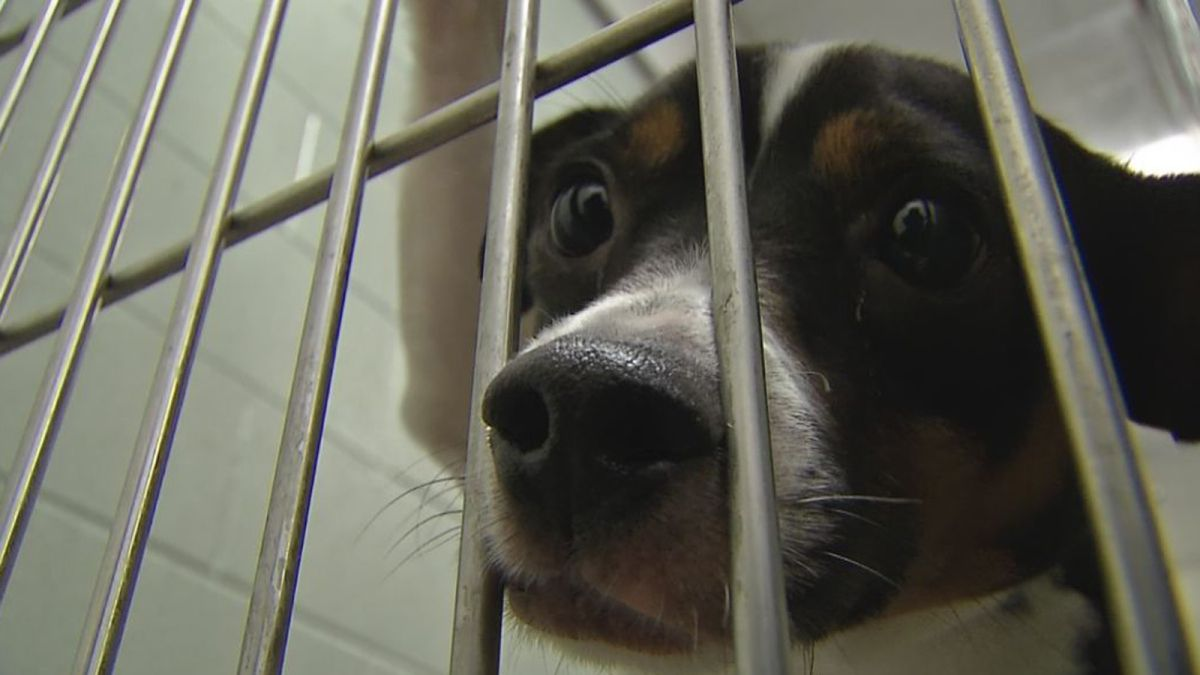 More than 100 lost dogs taken to Franklin Co. shelter
