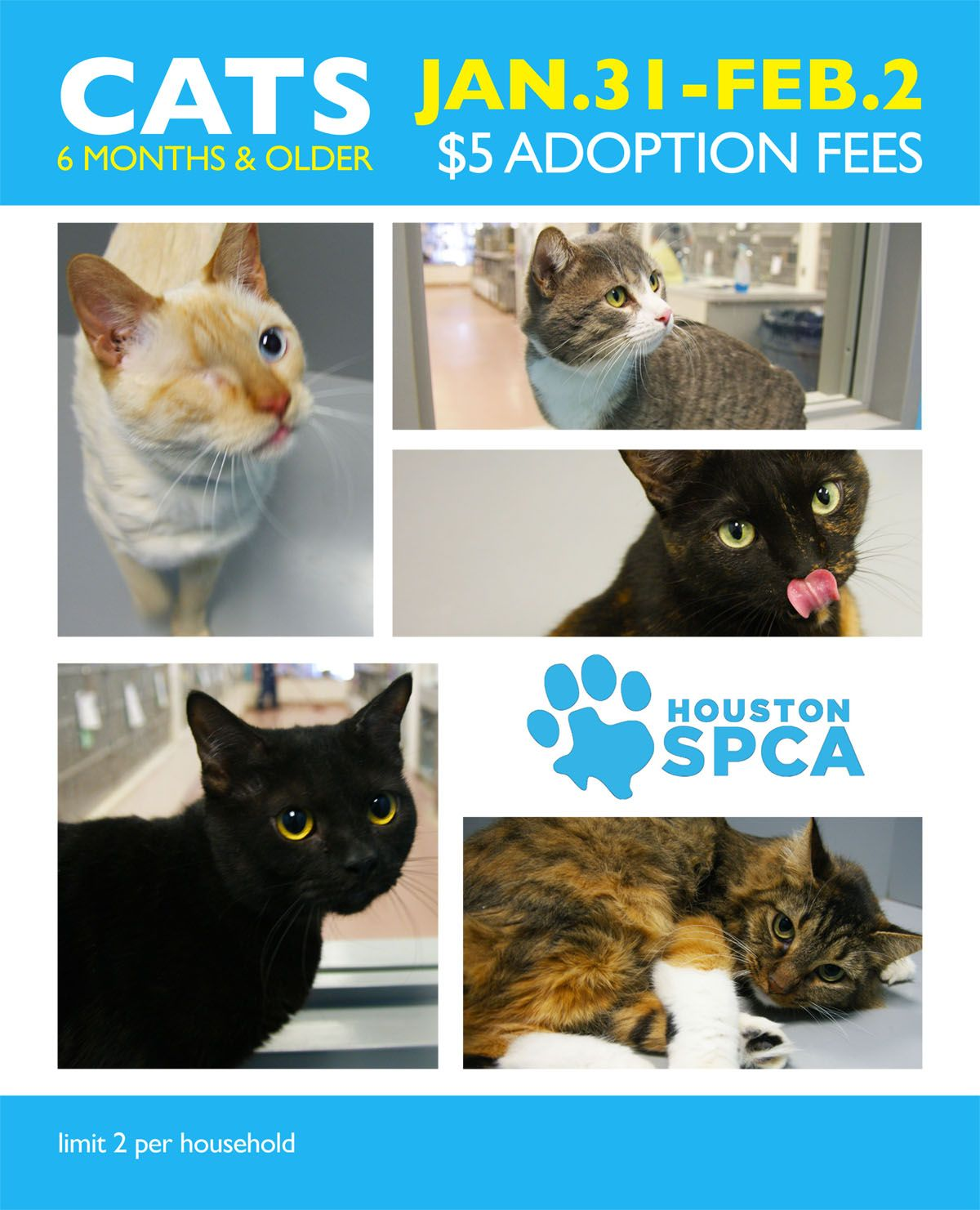 5 CAT ADOPTIONS AT THE HOUSTON SPCA Houston Events