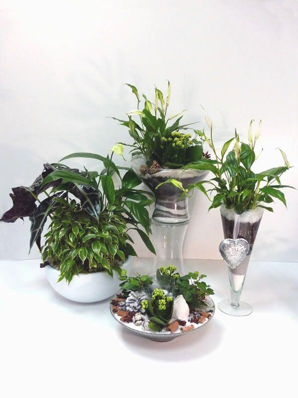 Les compositions d 39 int rieur fleur et nuances fleurs for Magasin plante verte