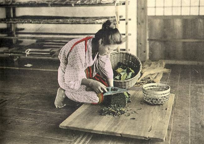 Cutting mulberry leaves to feed the Silkworms. The Silk Industry of Japan, Uyeda, Tokyo, c1925