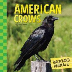 American crows - Peabody Main