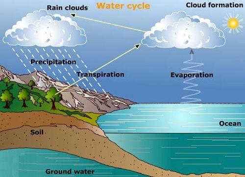 Rain Shower Head Vs Regular Shower Head How To Pick Rain Shower