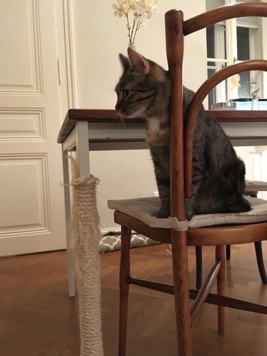 Kratz Tischbein für Katzen   Frag Mutti   Tischbeine, Tisch, Katzen