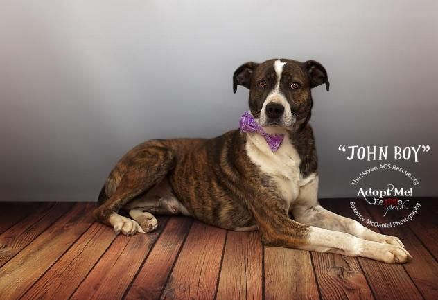 Adopt John Boy On Boxer Mix Interactive Dog Toys Dogs