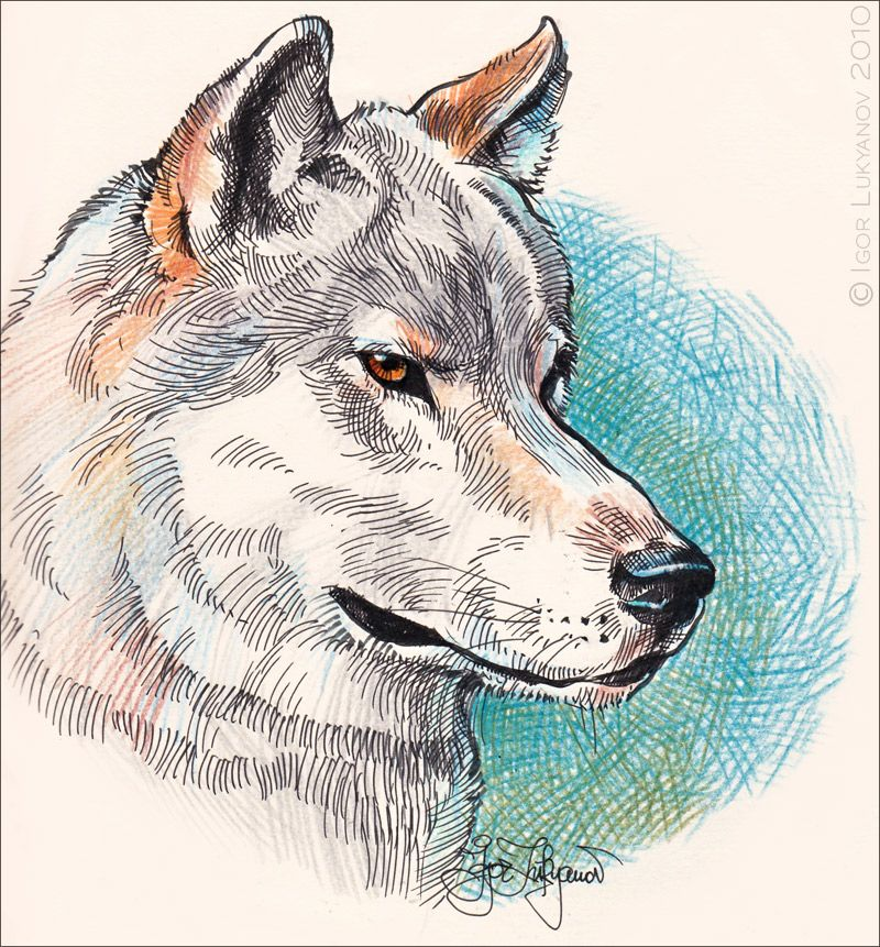 Wolves and the moon drawing with color pencil and soft