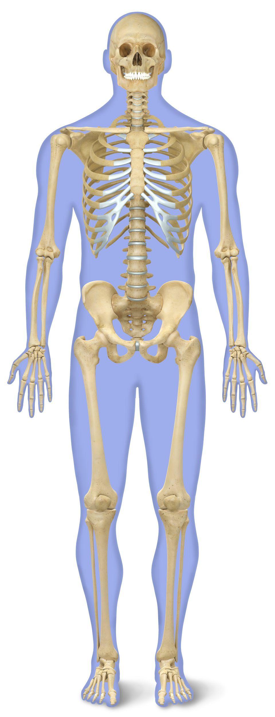 Niedlich Menschliches Körpersystem Quiz Bilder - Menschliche ...