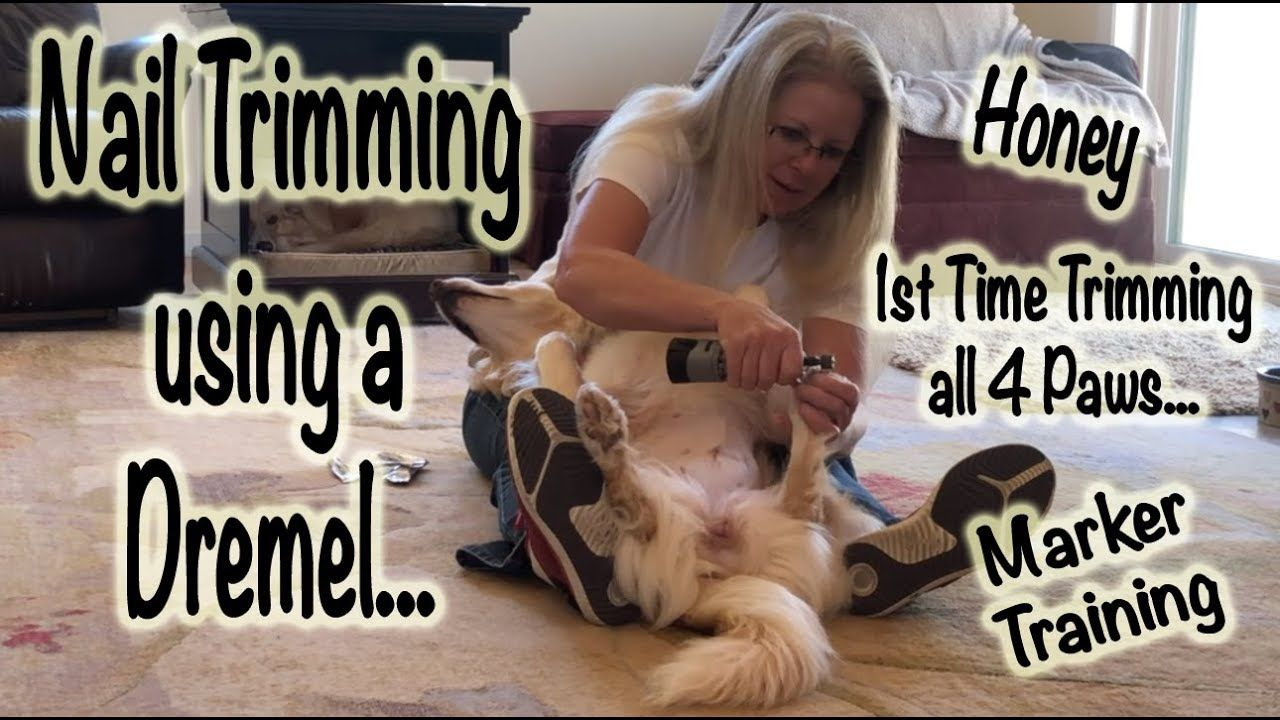 Nail Trimming using a Dremel Dog Training (With images